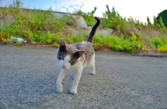 人懐っこいオス猫。