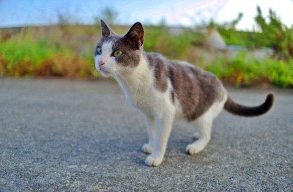 若いネコだから動くものに興味津々だ