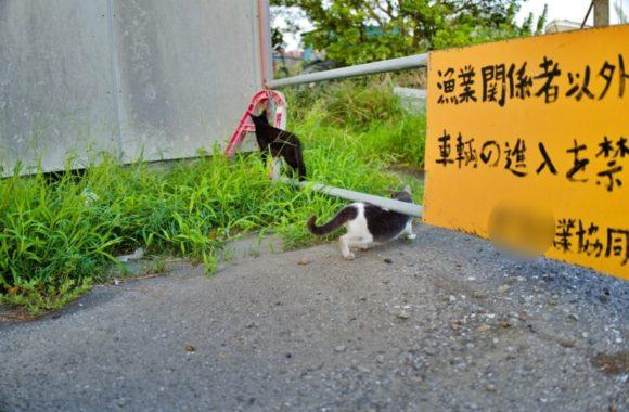 遊び盛りの猫