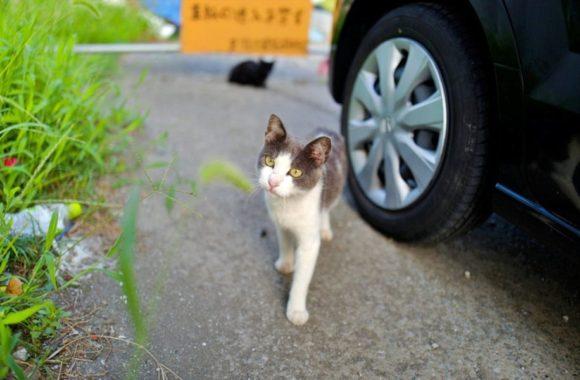 ネコもブラクリに興味津々。くれぐれもとられないように気をつけよう。