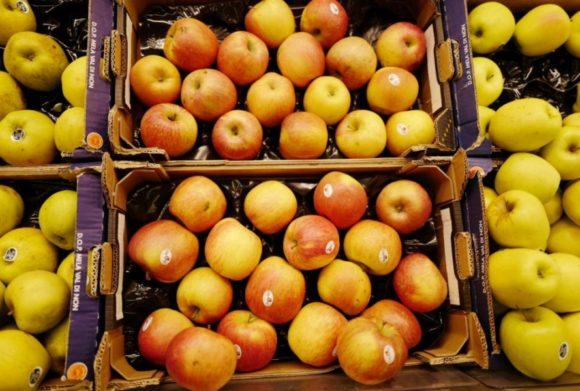 見慣れたリンゴ。