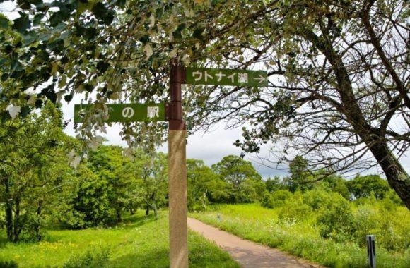 野鳥観察の道。