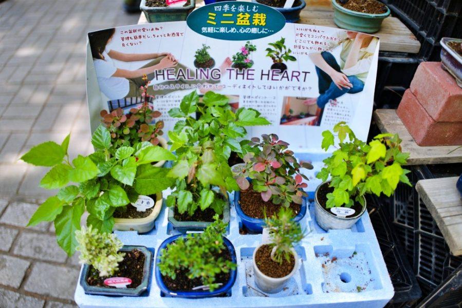 ミニ盆栽など観葉植物も園内で販売。
