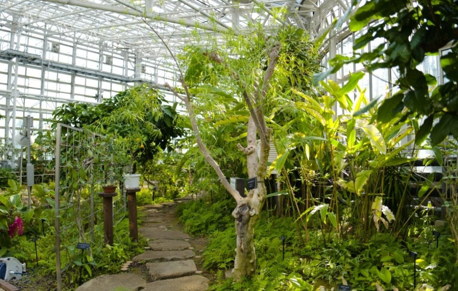 大温室の熱帯木室