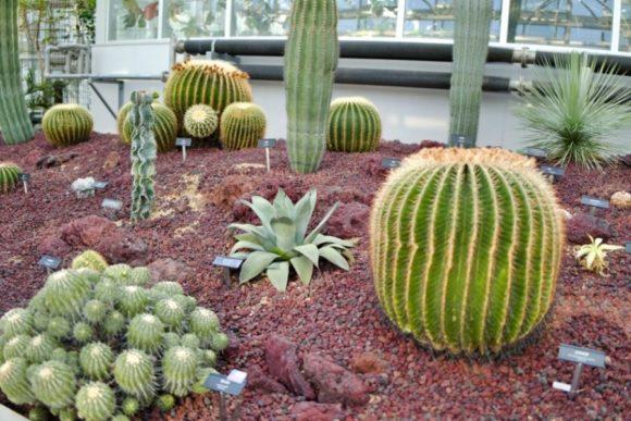 神代植物園の温室にあるサボテンたち。もはや動物みたいな存在感(^^)