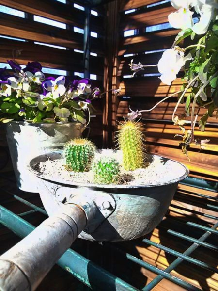 100均で買ったサボテンの寄せ植え。鉢(おたま)もジャンク風にリメイク。