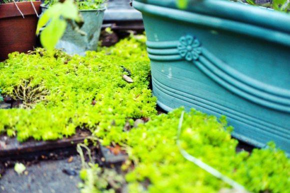 湿度が高いと成長力も早いぞ。