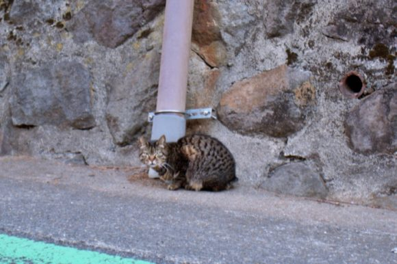 以前飼っていた猫のマーフィに似ている。