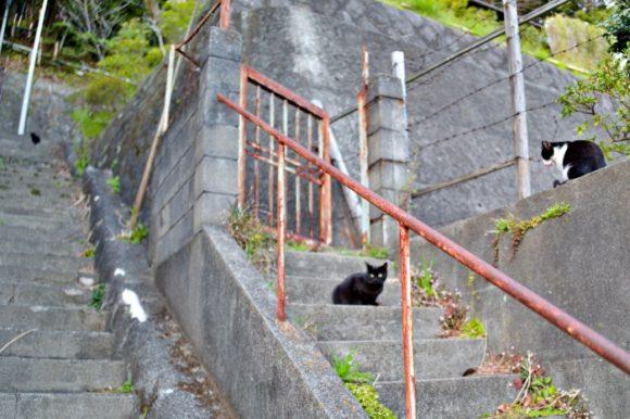 逃げていった猫たち。階段の左上にも黒猫。