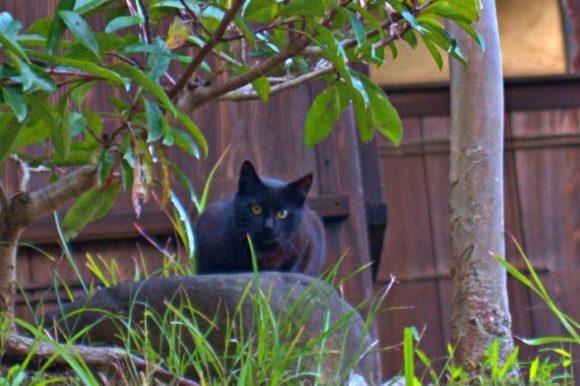 毛並みがいい若い猫だ。