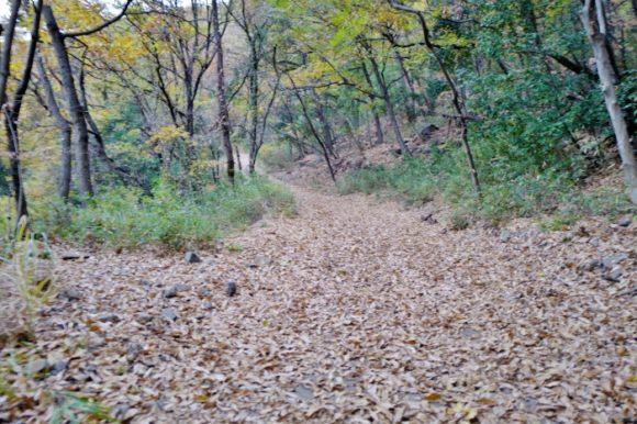 落ち葉で埋まっているが舗装されています(^-^;