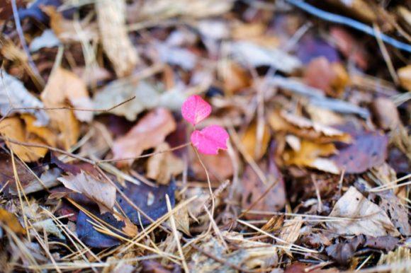 「小さい秋見~つけた」的な。