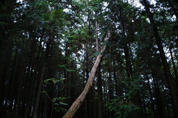 1本だけ倒れた木。均衡を破る生命の構図だ。