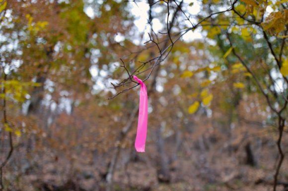 小さい枝にマーキングがあった(^^)