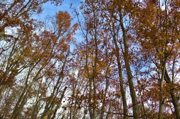 12月の山梨の木々。