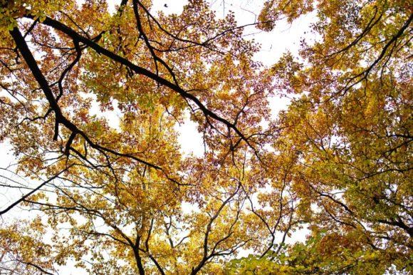 見上げたアングルの森の雰囲気が好きだ