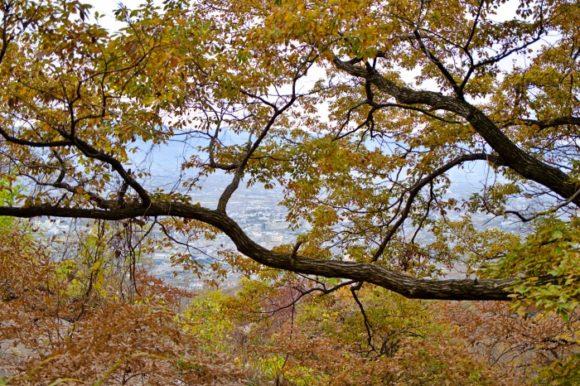 枝ぶりも日本画見たいで良いです。