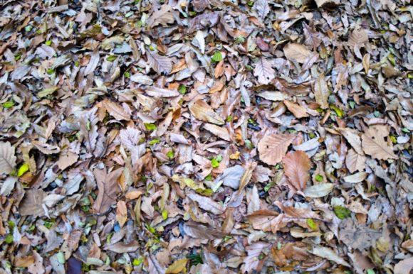 落葉の色も変わる。