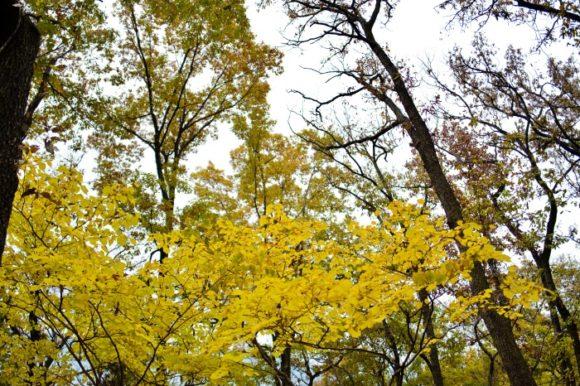 黄色い葉も美しいです。