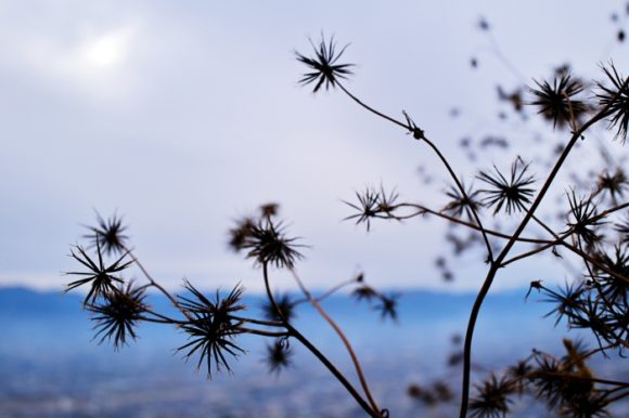 枯れ草が自然の星に見えた。