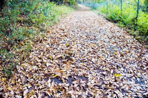 落葉で埋め尽くされた登山道(俳句かな?)。