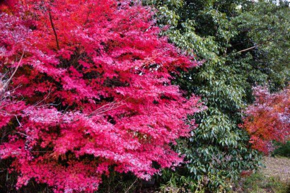 大蔵経寺山の麓は紅葉がわずかに残る。
