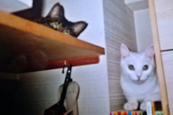 とにかく高いところが好きな猫。白猫ミルとツーショット。