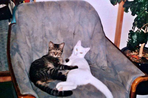 ソファーで寝るマーフィーとミル。