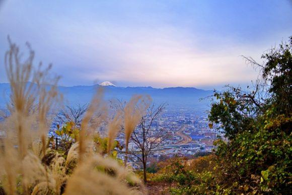 すすきの穂と富士山。