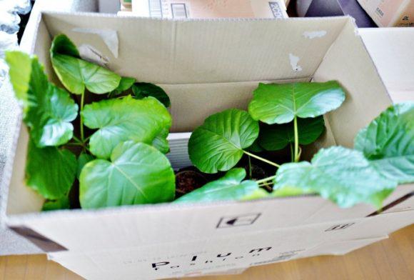 観葉植物もこんな感じに梱包
