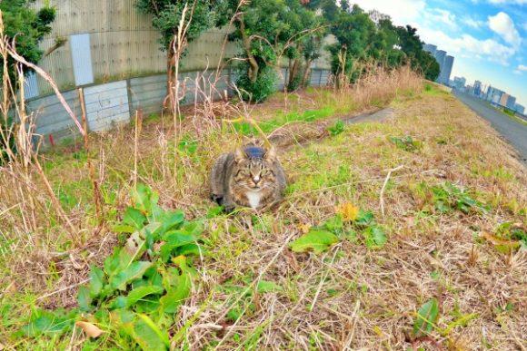 可愛い川崎にゃんこ。