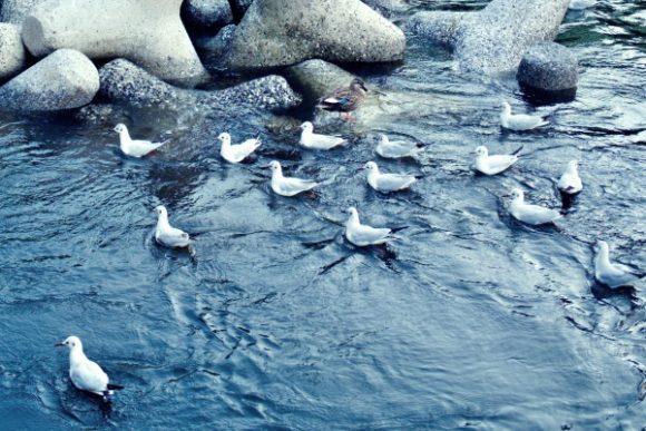 群れているのは、水中にプランクトンがいるようだ。