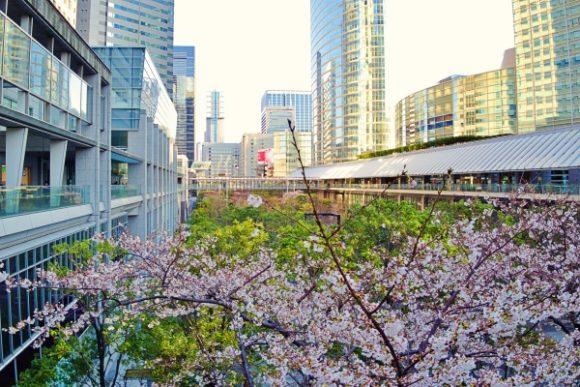 品川グランドコモンズの桜。