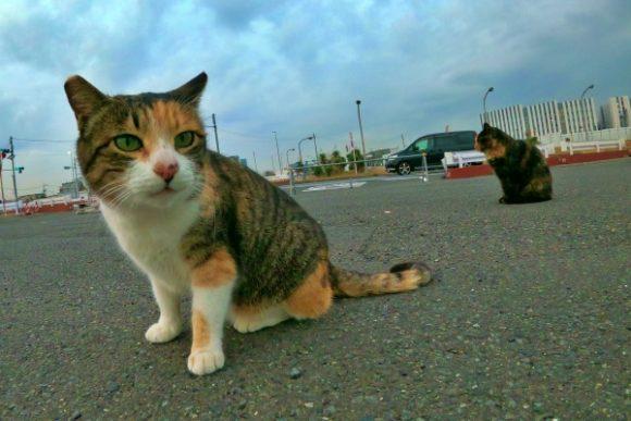 オジサン曰く美人猫らしい。たしかにKAWAII。