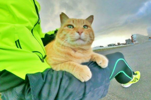 GOPROで撮影した多摩川の猫。