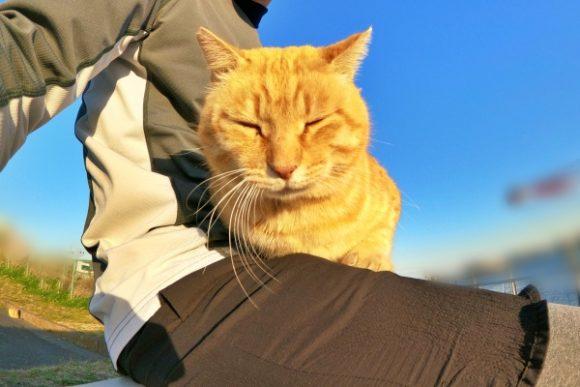 スポット,ボランティア,多摩川猫,小屋,小西,小西修,多摩川,台風,猫,猫スポット,地域猫,おすすめ,餌,CAT,おやつ,ランニング,去勢,耳,ブログ,マナー,餌,餌やり,耳,耳カット,場所,連れて帰る