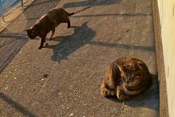 右の猫はマーフィーに似ている(警戒心が強い)。