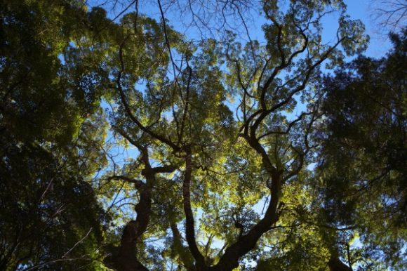 カッコイイアングルの大楠。