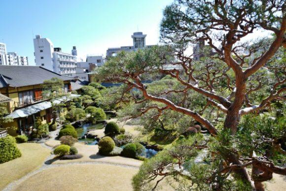 大鳳から眺める庭園。松が立派。