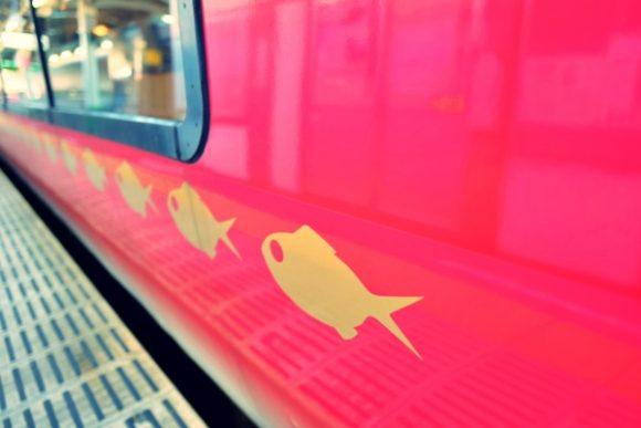 スイスイ泳ぐ金目鯛。