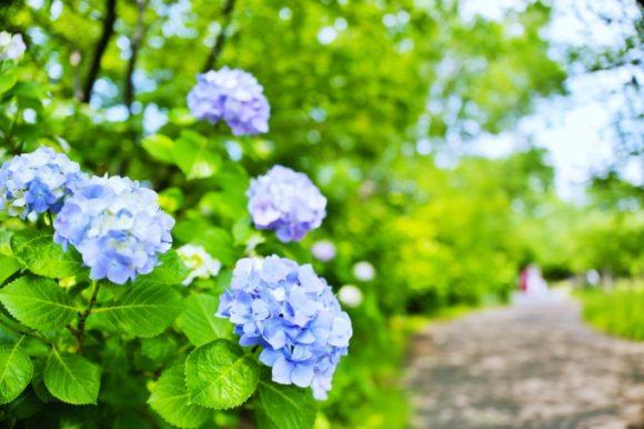 自然が少ない川崎区にとっては憩いの公園だ。