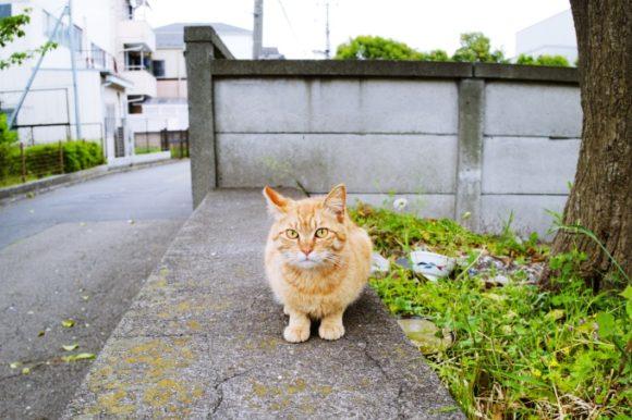 緊張している猫。
