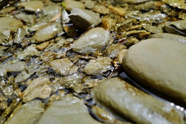 澄んでいてキレイな川面。