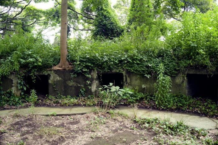猿島のほうが廃墟感がすごい。