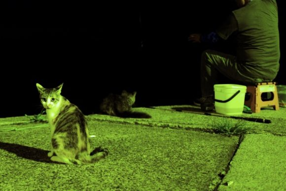 エサ待ちの猫たち。
