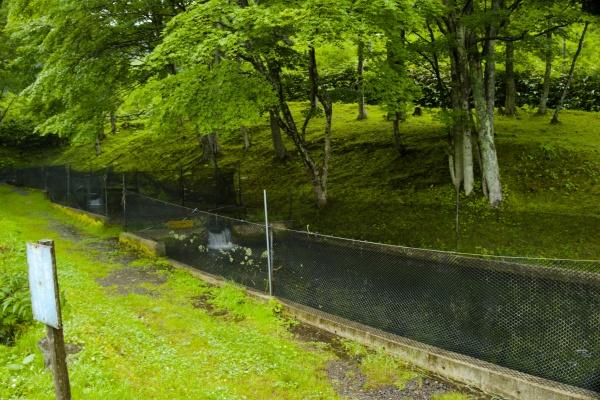 ヤマベの方が釣りは難しいようです。