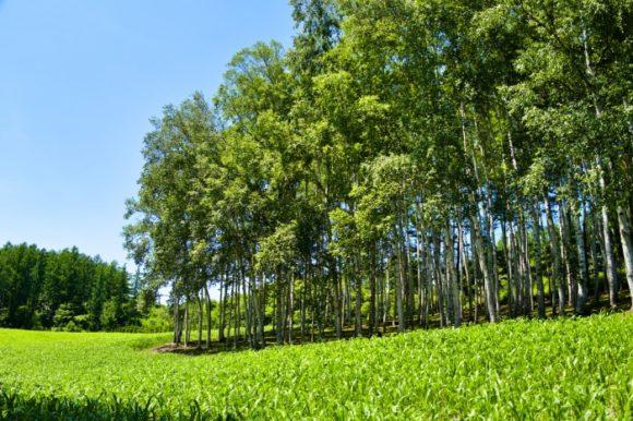 北海道らしい牧歌的な風景。最高です。
