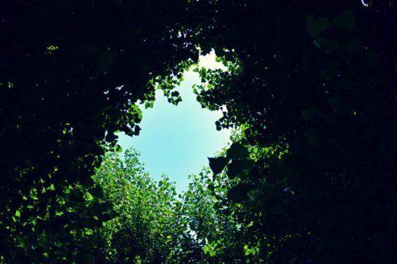 イチョウの葉が生む「葉のシルエット」