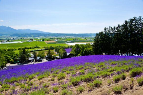 小高い丘から富良野を眺める。開放的な景色だ。