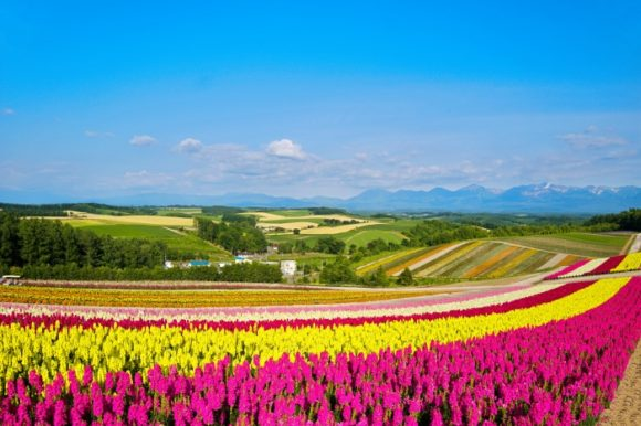 広大なお花畑です。